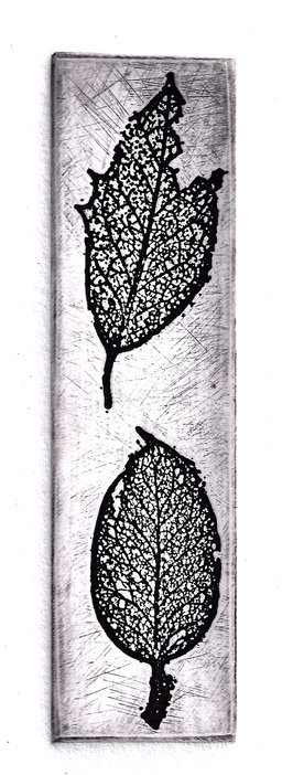 holly leaves etching print