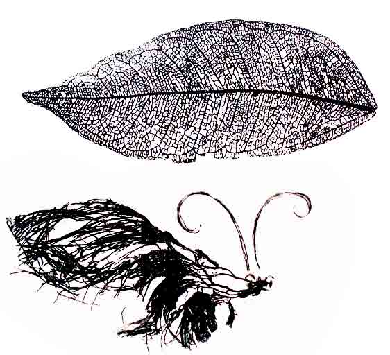 veined leaf art etching